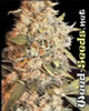Indoor Mix Feminized Marijuana Seeds