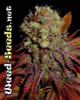 Rock Bud Marijuana Seeds