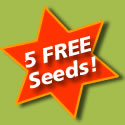 5 Free Cannabis Seeds Offer